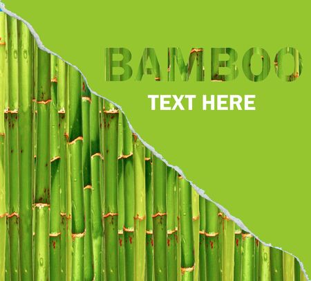 Bamboo background with ripped paper photo