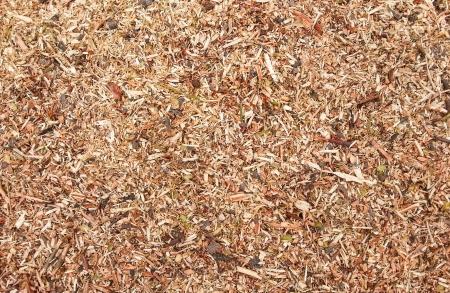 sawdust: Sawdust texture