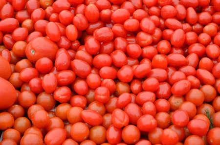 Fresh pomodori Italian tomatoes background Stock Photo - 18446185