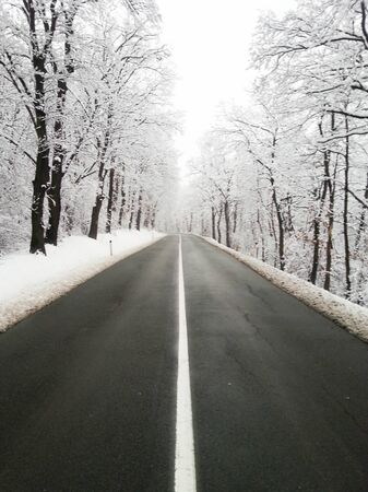 Snow forest and empty road photo