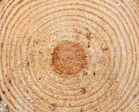 Texture of wood cut at half photo