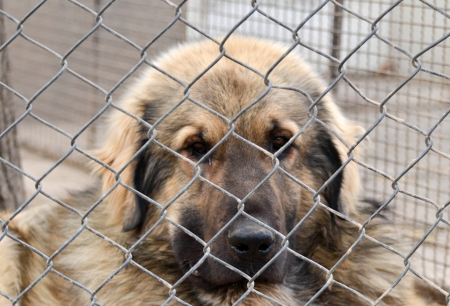 shepperd: Dog in captivity concept Stock Photo