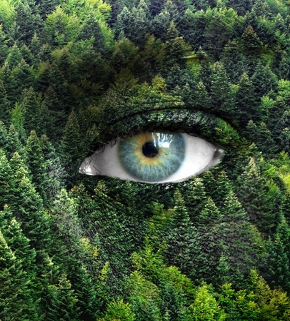 Green forest and human eyes - Save nature concept photo