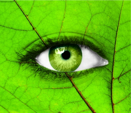 Green human eye with leaf - Ecology concept photo