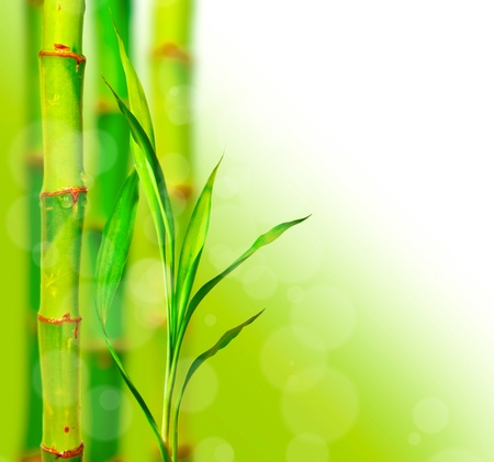 Beautiful bamboo background with bokeh photo