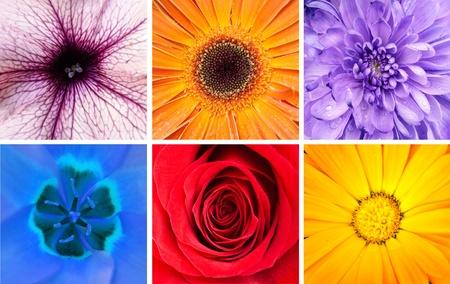Beautiful flowers collage - Macro shots photo