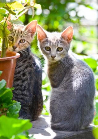 Cute kittens in garden photo
