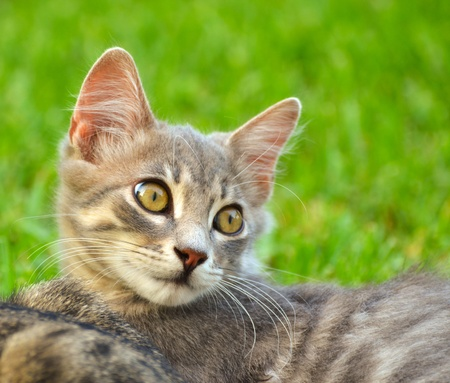 Cute kitten portrait outdoor photo