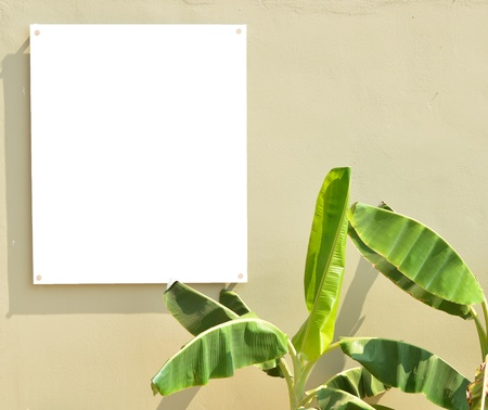 Empty board onw wall with palm leaves photo