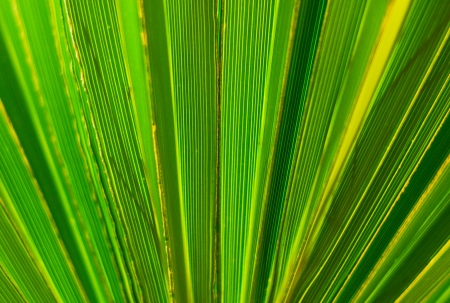 Palm leaf abstract background photo