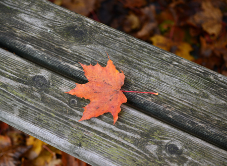 Autumn leaf on wooden bench at park photo