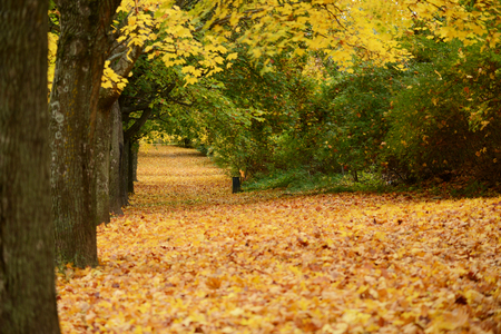 Beautiful autumn forest with walkiing path photo