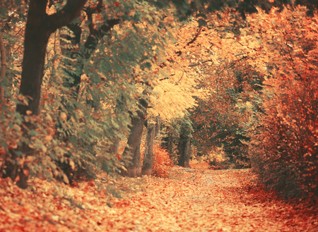 Beautiful dreamy autumn forest with walkiing path photo