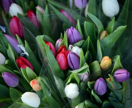 Beautiful tulips bouquet photo