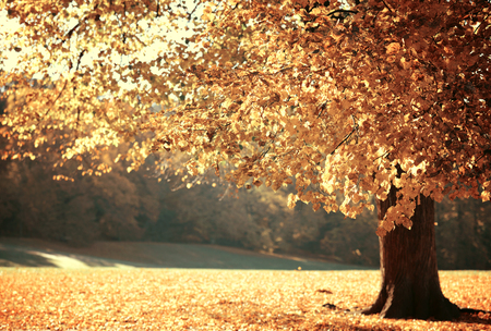 Dreamy image of beautiful Autumn forest Stock Photo - 23318264