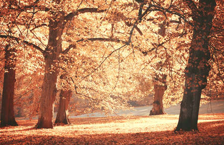 Dreamy image of beautiful Autumn forest photo