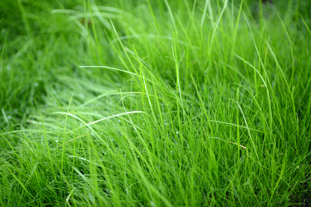 Grass Background With Vignette photo