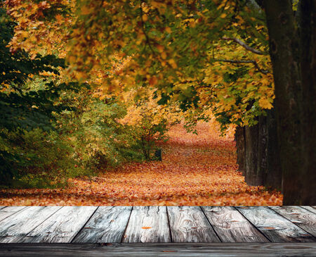 Beautiful autumn forest with wooden floor photo