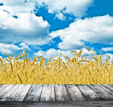 Wheat field and blue sky above wood floor photo