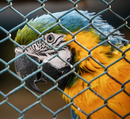Macaw in cage photo