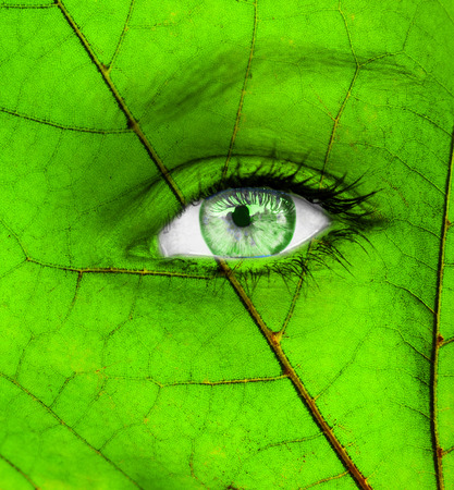 Ecology conceptual image with green human eye photo