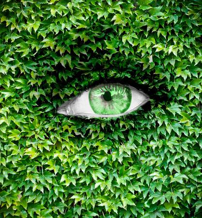 eye green: Ojo verde de cerca y la textura de la hoja en la cara Foto de archivo