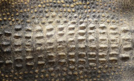 Krokodil huid textuur  Stockfoto