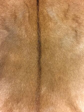 animal fur: Animal fur