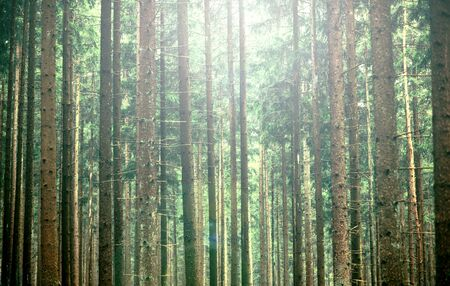 unaffected: Mystical green forest