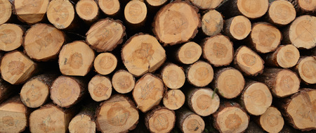 pile of logs: Pile of wood logs ready for winter Stock Photo