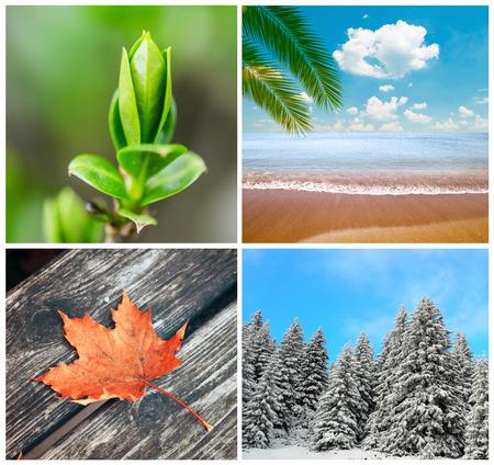 four season: Four season conceptual collage Stock Photo