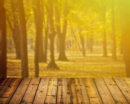 Autumn forest and wooden floor photo