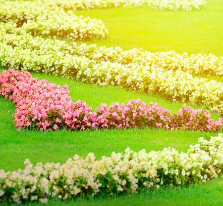 schloss schoenbrunn: Beautiful flower garden in Schonbrunn palace - Vienna Austria