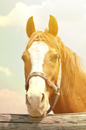 gelding: Beautiful horse portrait