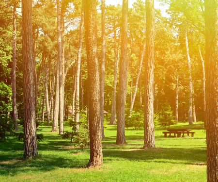 grass area: Beautiful scenery of green forest with picnic table and cottage