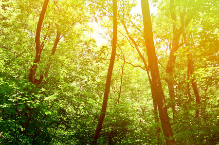 mystical forest: Beautiful green forest background Stock Photo
