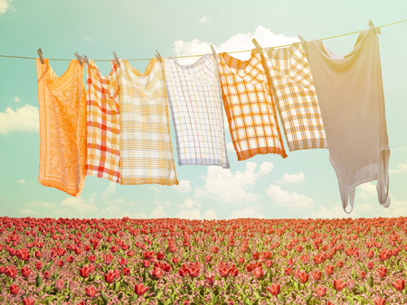 laundry line: Laundry hanging over flower field