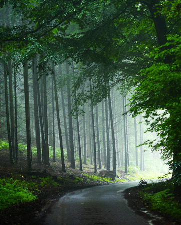 mystical forest: Mystical forest Stock Photo