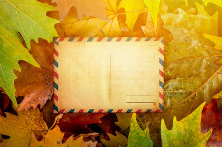 adress: Maple leaves with blank postcard