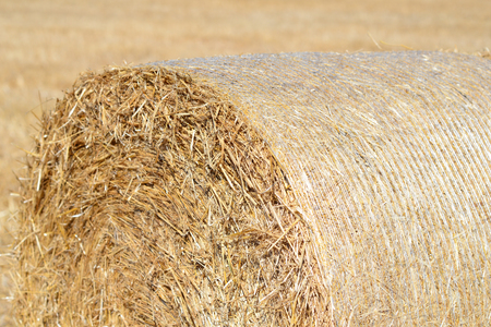 hayroll: Hay roll on field