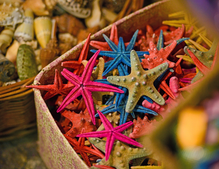 cushion sea star: Group of colorful sea stars and shells in baskets at market