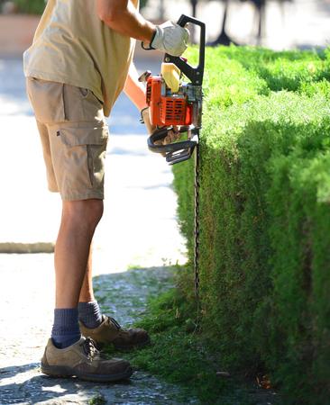hedge: Man cutting hedge Stock Photo