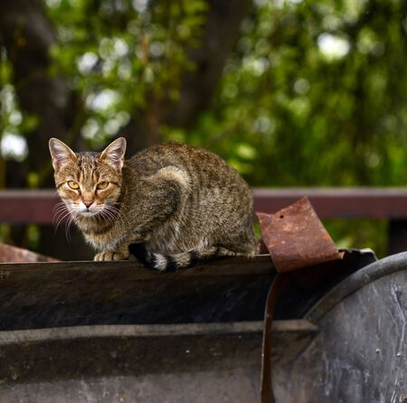 curiously: Cat near garbage looking curiously Stock Photo