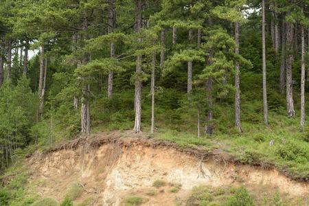 runoff: Forest erosion