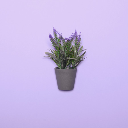 Lavander in vase - Top view