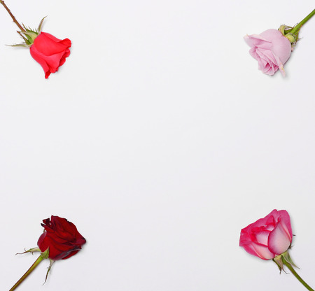 four corners: Four roses in four corners and blank space in middle for your text or add - Flat lay