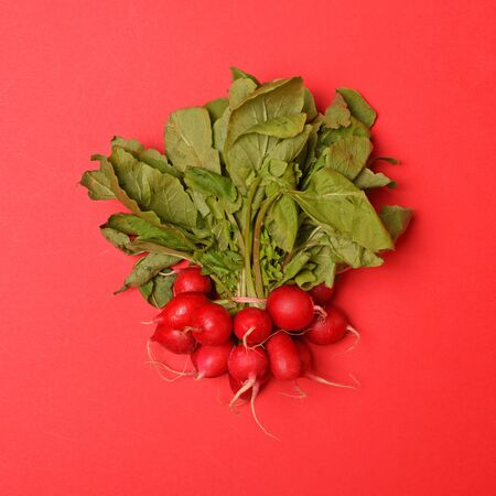 Radish fresh vegetables on red background - Trendy minimal flat lay design