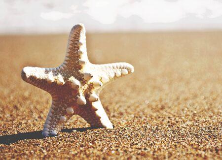 White starfish on tropical sand beach