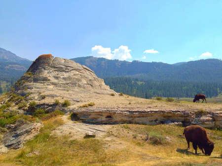 calcium carbonate: Travertino e bufali nel Parco Nazionale di Yellowstone. Archivio Fotografico