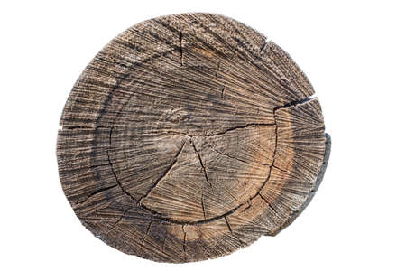logwood: Cross section of tree trunk showing growth rings on white background. log. timber wood texture